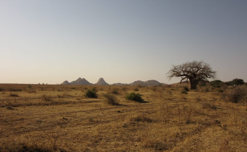 Field activities in Sudan